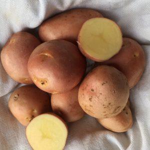 Patate Desirée