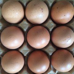 Uova confezione da 4