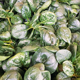 Spinacini da insalata 200 gr