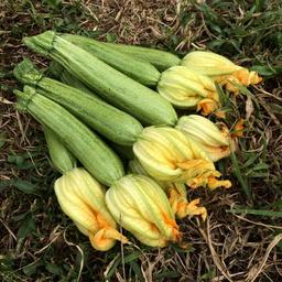 Zucchine 500 gr