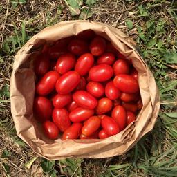 Pomodoro datterino 400 gr