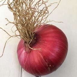 Cipolle rosse 500 gr