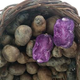 Patate viola 500 gr