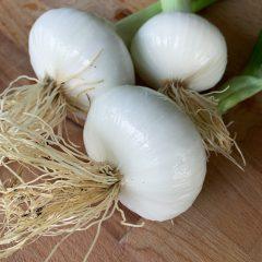 [SPEDIZIONE] Cipolle bianche fresche 500 gr