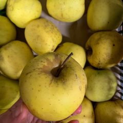 Mele Golden Delicious 1 kg
